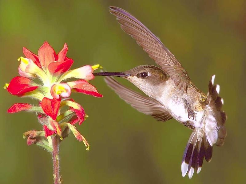 colibri8